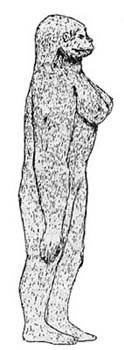 A drawing of the Sasquatch